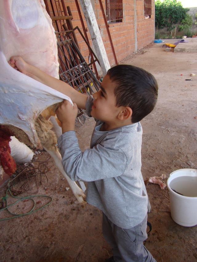 sacrifice du mouton aid 2012 tunisie