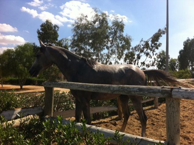 cheval ranch club sfax